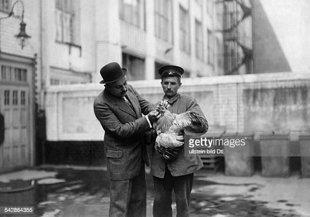 Beim Tierarzt Ein krankes Huhn wird untersucht undatiert vermutlich 1911veröffentlicht Praktische Berlinerin 44/1911 Hausfrau 44/1911 Praktische...