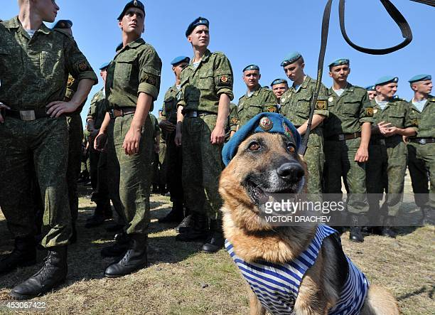 Belarus soldiers of airborne forces celebrate the paratroopers day in Brest on August 2 2014 AFP PHOTO / VICTOR DRACHEV