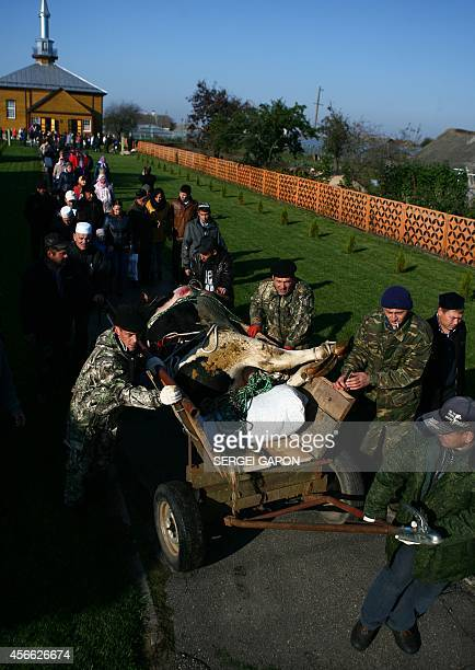 Belarusian muslims carry the carcass of a bull outside the mosque after prayers on the first day of the Eid alAdha in the village of Ivye some 125 km...