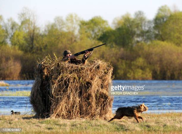 Belarussian duck hunter stands in a blind near the backwaters of the Pripyat river some 270km south of Minsk near the village of Kremno on April 21,...