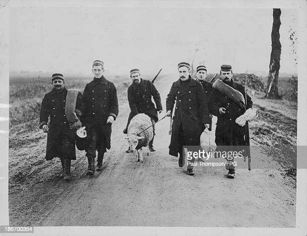 Belgian soldiers with a sheep taken from a nearby field to feed the company Ypres Belgium circa 19141918