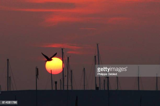Belgium, West Flanders, Blankenberge, Cropped image of seagull flying into sunset
