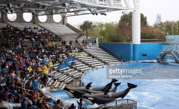 'Believe, The Spectacular Shamu Show,' resumes at SeaWorld's Shamu Stadium, three days after an orca killed veteran trainer Dawn Brancheau, on Feb....