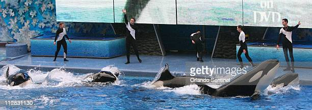 Believe, The Spectacular Shamu Show, resumes February 27 at SeaWorld's Shamu Stadium, three days after a killer whale pulled veteran trainer Dawn...