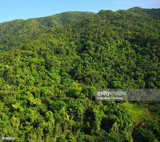 Belize - Jungle Hillside