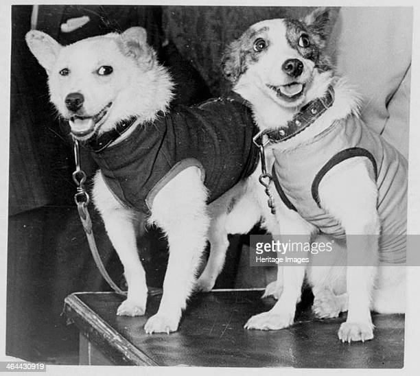 Belka and Strelka Russian cosmonaut dogs 1960 Belka and Strelka flew into Earth orbit on board Sputnik 5 on 19 August 1960 as part of the Soviet...