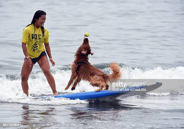 Bell catches a ball next to owner Nao Omura as they ride on a wave during the animal surfing portion of the Mabo Royal Kj Cup surfing contest at...