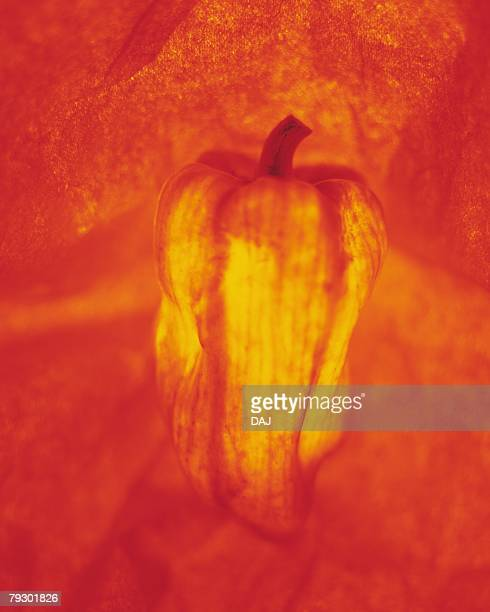 Bell pepper, front view, toned image, defocused