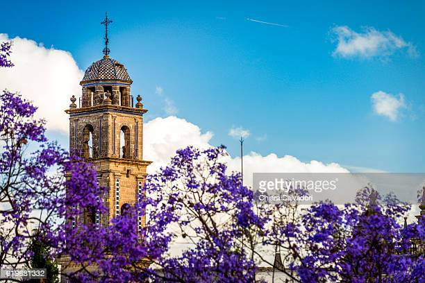 bell tower of the catedral del salvador, jerez de la frontera - jerez de la frontera stock pictures, royalty-free photos & images
