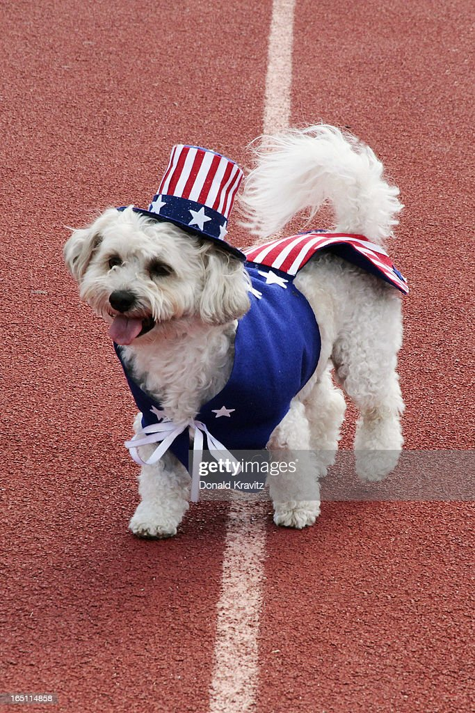 Belle, a Bichon, her patriotic outfit attends the Woofin Paws pet fashion show at Carey Field on March 30, 2013 in Ocean City, New Jersey.
