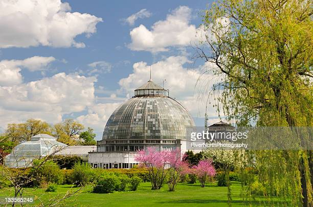 belle isle conservatory - detroit michigan stock-fotos und bilder