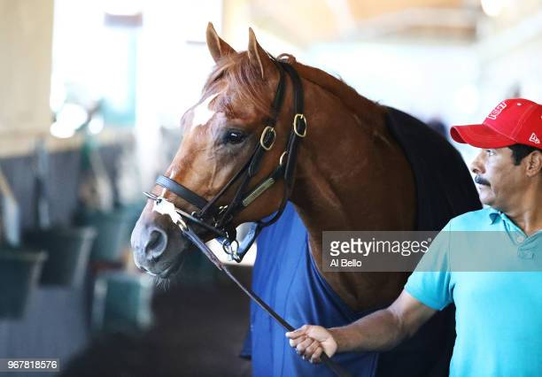 Belmont Stakes contender Hofburg warms down in his barn prior to the 150th running of the Belmont Stakes at Belmont Park on June 5 2018 in Elmont New...