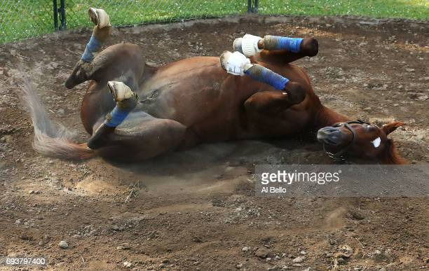 Belmont Stakes contender Irish War Cry rolls in the dirt in his pen after a training session prior to the 149th running of the Belmont Stakes at...