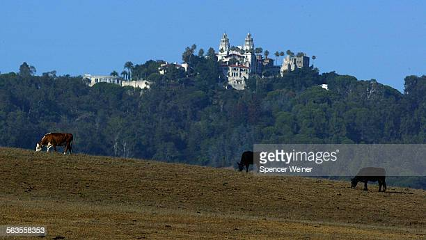 Below Hearst Castle a state–owned island surrounded by the 83000–acre Hearst Ranch cattle graze on a part of the vast property that has been in the...