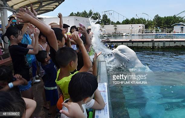 A beluga whale sprays water towards visitors during a summer attraction at the Hakkeijima Sea Paradise aquarium in Yokohama suburban Tokyo on July 20...