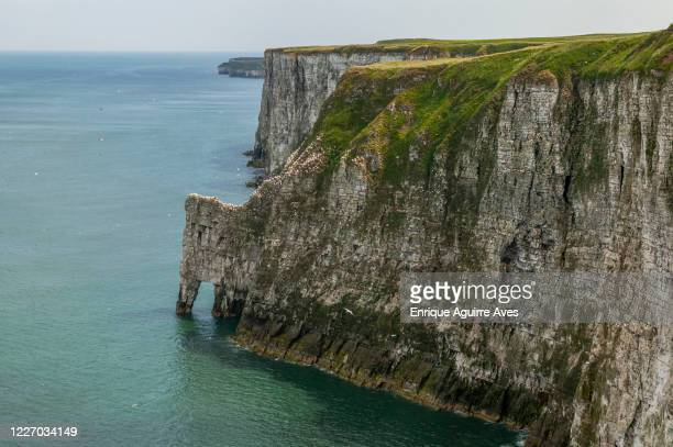 bempton cliffs, seabird colony - nature reserve stock pictures, royalty-free photos & images