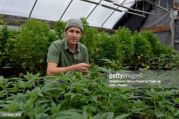 Ben Davies looks over his hemp crop at his Wild Fox Farm in Barto Pa Monday March 30 as the coronavirus epidemic forces changes in the way he markets...