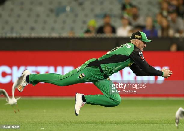 Ben Dunk of the Stars takes catch to dismiss Nic Maddinson of the Sydney Sixers during the Big Bash League match between the Melbourne Stars and the...