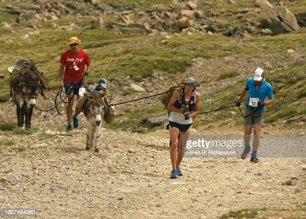 Ben Orvold in the middle drags his donkey Alice up a rocky road as the duo head near the summit of Mosquito Pass as they take part in the 70th annual...
