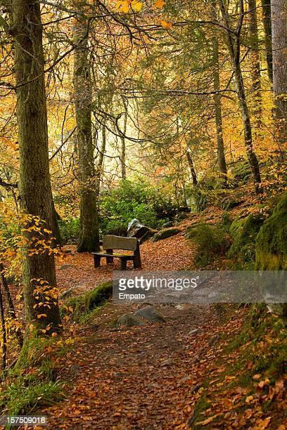 Bench among Autumn trees.