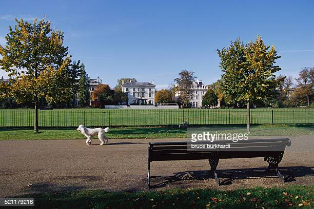 Bench and Dog in Hyde Park