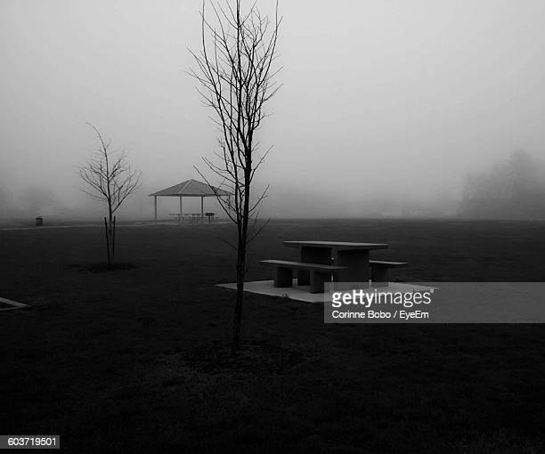 bench and table by bare tree on grassy field in foggy weather at park - corinne paradis photos et images de collection