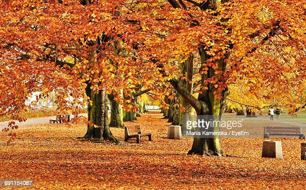 Bench By Autumn Trees Leaf Covered On Field At Park