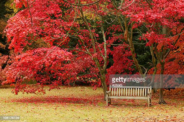 Bench by Maple
