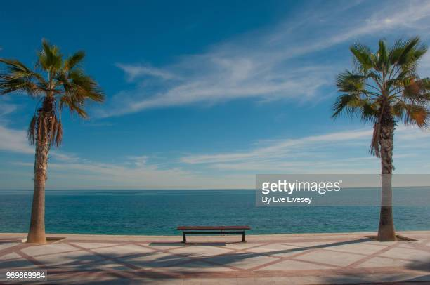 bench by the sea flanked by 2 palm trees - valencia spain stock pictures, royalty-free photos & images