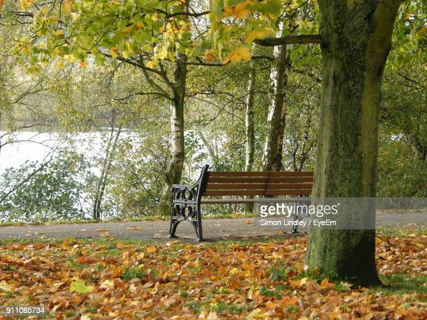 Bench By Trees In Park During Autumn