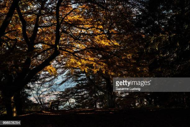 bench in autumn - susanne ludwig stock pictures, royalty-free photos & images