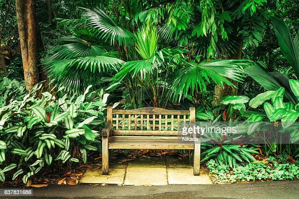 bench in botanic garden - singapore botanic gardens stock photos and pictures