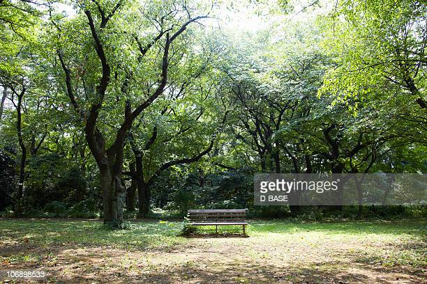 Bench in forest.