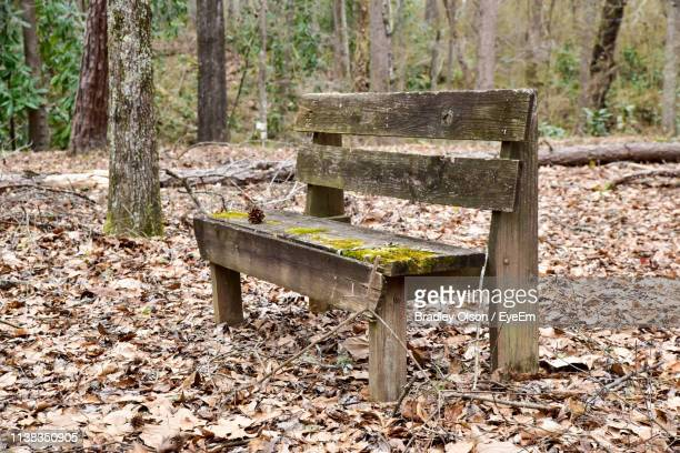 bench in forest - georgia country stock pictures, royalty-free photos & images