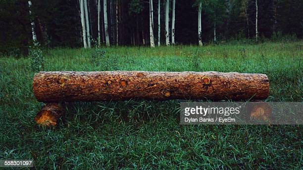bench in forest - log stock pictures, royalty-free photos & images