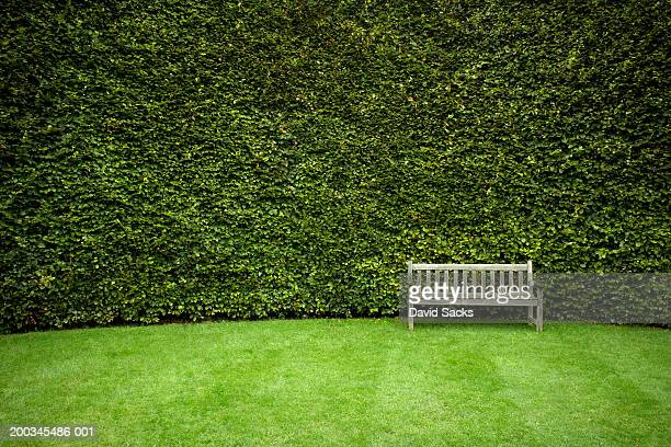 bench in garden - hedge stock pictures, royalty-free photos & images