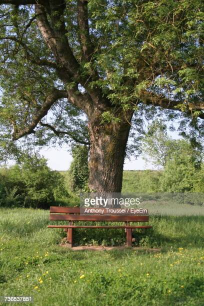 Bench In Park Against Sky