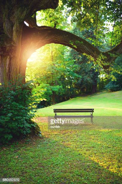 Bench in park at sunset