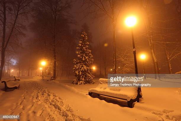 bench in snow at night park