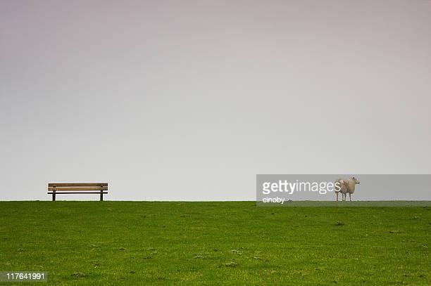 Bench-Schaf