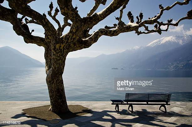 bench under the tree - ascona stock photos and pictures