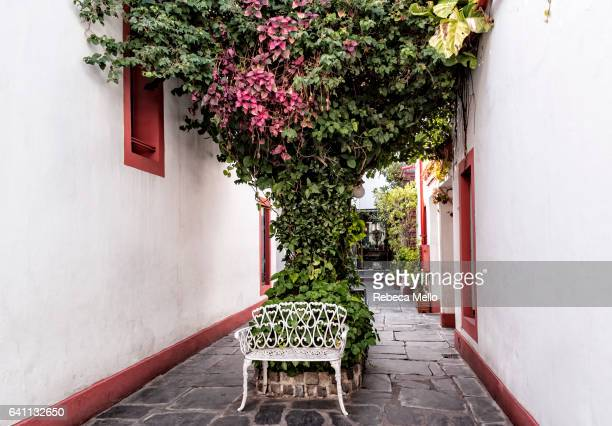 A bench under the tree with vines