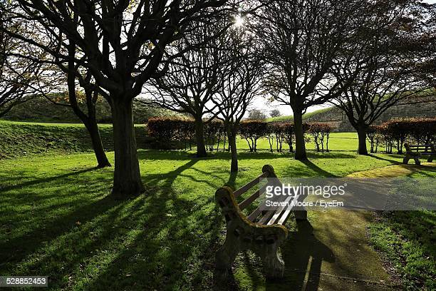 Bench With Tree On Grassy Field In Garden