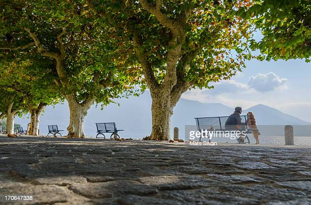 benches and trees on the lakefront - ascona stock pictures, royalty-free photos & images