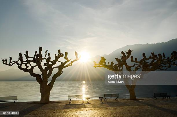 benches and trees with sun - ascona stock photos and pictures