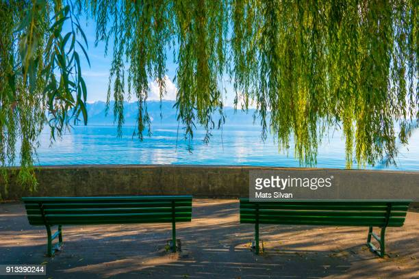 Benches and Weeping Willow Tree on the Waterfront
