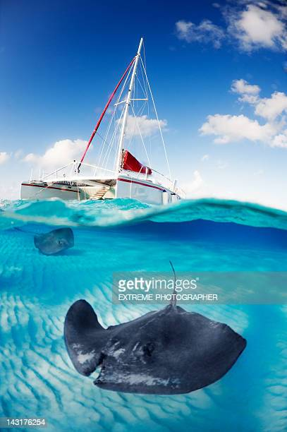 beneath the surface - stingray stock photos and pictures