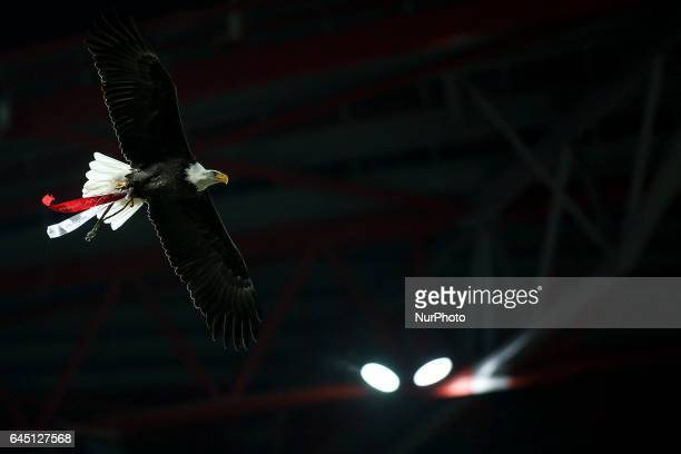 Benfica Eagle flies over the pitch moments before the Portuguese League football match between SL Benfica and GD Chaves at Luz Stadium in Lisbon on...