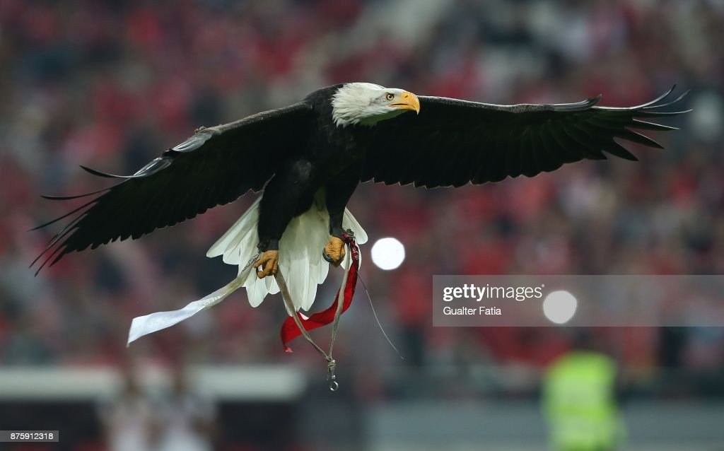 SL Benfica eagle in action before the start of the Portuguese Cup match between SL Benfica and Vitoria Setubal at Estadio da Luz on November 18, 2017 in Lisbon, Portugal.