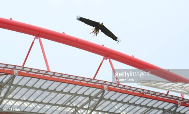 Benfica eagle in action before the start of the Primeira Liga match between SL Benfica and CD Aves at Estadio da Luz on March 10 2018 in Lisbon...